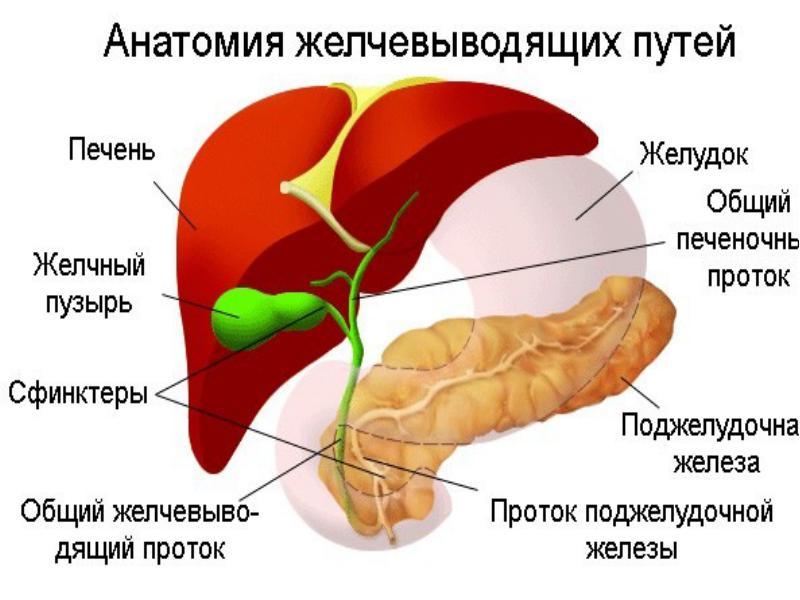 Причиной обострения хронического панкреатита может стать дискинезия желчных путей
