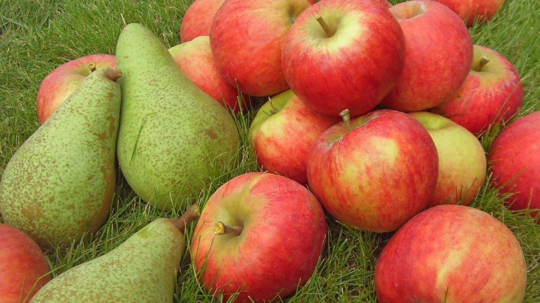 Запеченные яблоки и груши разнообразят меню больного